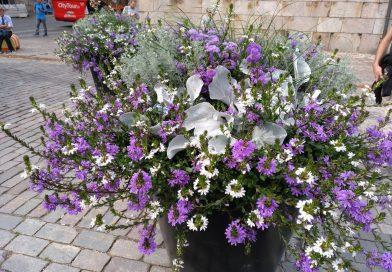 Composiciones de plantas para macetas y jardineras 1