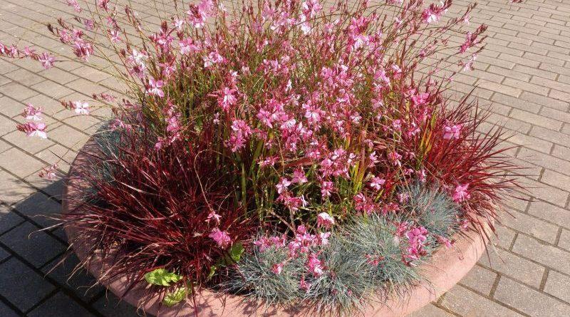 Composiciones de plantas para macetas y jardineras 2